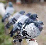 #Bird Deterrent Apopka
