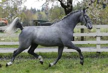 Pewter Color Horses / Pewter Color #Horses