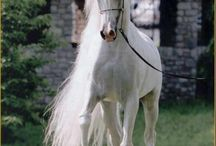 Graceful Horses
