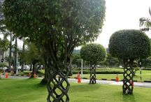 Gardens > Topiary