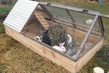 Bunny houses