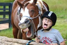 Fun & Fav Horse pics / Pictures of our 4 legged Friends.
