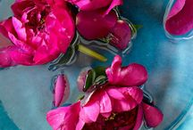 """Colours ~ """"Pink & Aqua"""" ~"""