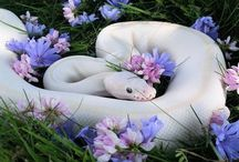 pretty nature