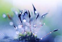 Tropfen/Drops II / ooo / by Uschi Iseli