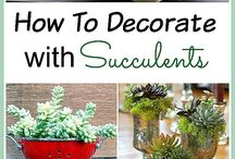 How to decorate with suculents