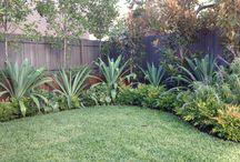 garden /back / plants / by Anna Gardiner
