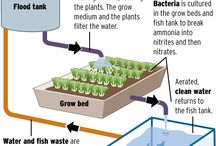 Aquaponics and farming / by Nicole Lane