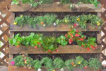 Garden / by Essentially Ellen