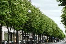 Avenue Montaigne Paris