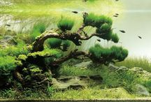 Aquariums / Salt water and fresh water aquariums for all the fish tank pinkles.  / by Katie Taylor