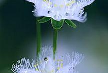 Flores / Flores