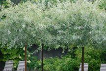 Träd o buskar
