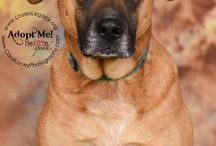 Adoptable Ohio Pets / Adoptable dogs and cats through www.louieslegacy.org