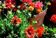 my garden / All my adventures with gardening in pots