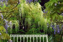 gardens / by Moira Gavin