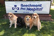 Summer Dangers for Pets / Beechmont Pet Hospital health tips about summer dangers for pets in Cincinnati, Ohio. Our veterinarians Dr. Stewart Smith, Dr. Katie Larson, Dr. Maria Kohls, Dr. Meredith Meyer, Dr.Jennifer Millette and Dr. Lori Whitacre.