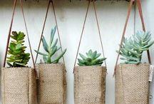 Växter / Blommor växter trädgård