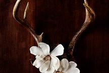 Antlers and skulls / by Sheri Lyn
