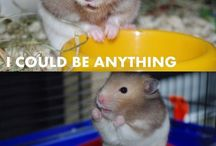 Sassy Hamsters. / A board dedicated to hamsters who are just so... Zazzy!