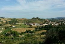Fattoria Malacoda / Azienda agricola nel comune di Castelfiorentino di 140 ettari