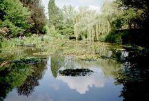 Giverny / by Theresa Natti
