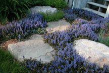 Garden ideas / by Amanda Louder