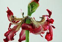 Flower // photos
