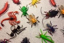 Bugs~Lesson plans