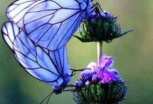 Butterflies / Beautiful imagery of butterflies and moths