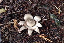 Mushroom in Germany