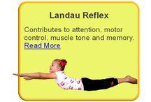 Landau Reflex