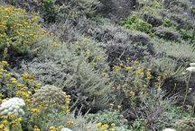 Drought Tolerant Plants - Los Angeles