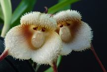 kwiaty cudaki