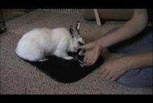 Bunny Care / by Blair Osburn