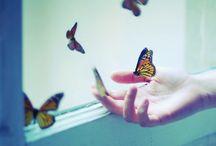 Go, Butterflies, Go!  / by Cadischa Lampe