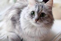 Søde katte og kattekillinger
