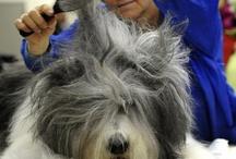 Fashion - Hair / by Terri Shepflin - Lotus Petaler Designs