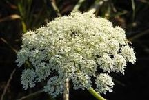Herbs for Lovemaking