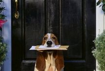 Wish my dog did that / Dog getting the mail,cute