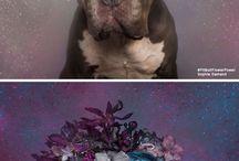 dogs wearing flowers!!!
