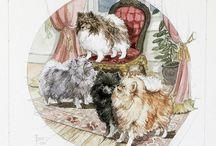 German Spitz Klein / Pomeranians