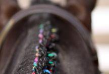 Koně hříva
