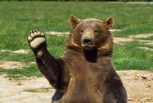 Bears Waving at You / It's all in the title.