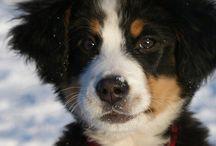 mooiste hond! (toekomst)