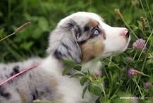 Puppies! / by Melanie Murphy