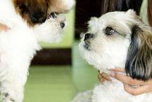 Pet Blog - have a read