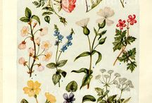 Flores y Fauna