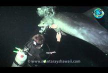ΔηDolphin entangled with fishing line rescued by divers in Kona Hawaii