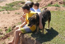 Dogs Named Bosco / by Loretta Westin